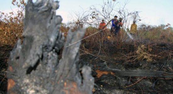 Kebakaran Lahan 10,5 Hektare di Aceh Barat Belum Bisa Dipadamkan