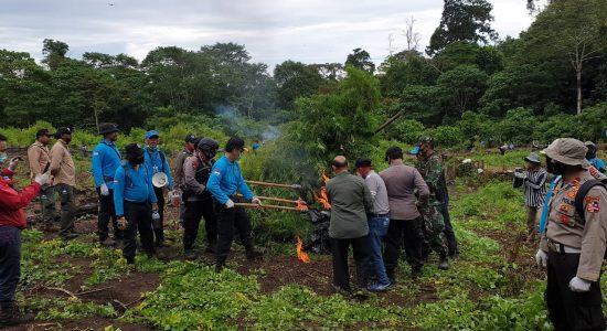 Pemusnahan Ladang Ganja di Hutan Aceh Besar
