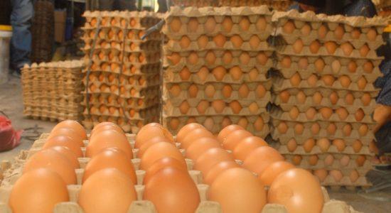 Harga Telur Ayam di Aceh Barat Mulai Turun