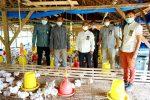 Bank Aceh Syariah Bantu UMKM Kembangkan Ternak Ayam di Pijay