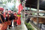 Kemenag Aceh Tenggara Kembangkan Wakaf Produktif Penggemukan Sapi