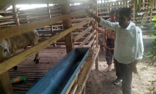 Mukhtar Daud Bakal Alokasikan Dana APBA untuk Ternak Kambing