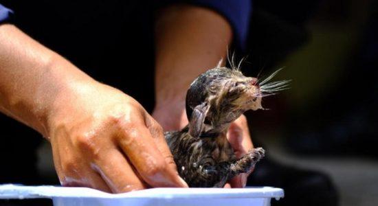 Aksi Petugas Damkar Selamatkan Bayi Kucing Terjebak di Pipa Rumah